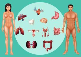 Man och kvinna med olika organ på affischen