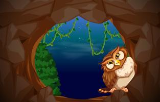 Eule im Höhleneingang