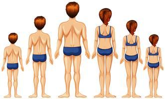 Männliche und weibliche Rückseite vektor