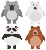 Olika typer av björnar på vit bakgrund vektor