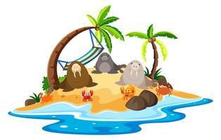 Walrus och krabbor på ön