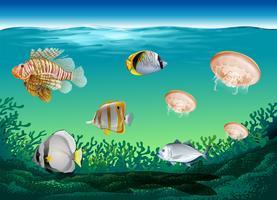 Många fiskar simmar under havet vektor