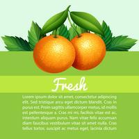 Infografik mit frischen Orangen