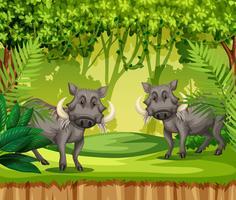 Två vildsvin i djungeln vektor