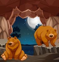 Två bruna björnar i grottan vektor