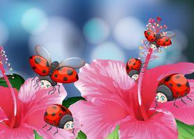 Viele Marienkäfer auf rosa Blumen vektor