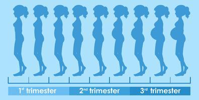 Ein Vektor des Schwangerschaftsfortschritts