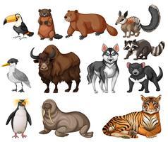 Verschiedene Arten von Wildtieren