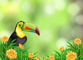 En toucan på naturbakgrund vektor