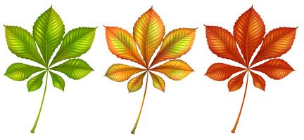Blattige Pflanzen vektor