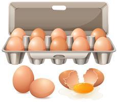 Karton Eier und rohes Eigelb vektor