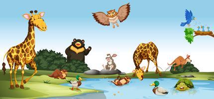 Vilda djur som bor vid dammen vektor