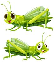 Två gräshoppor med gott ansikte vektor