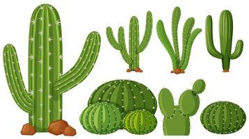 Verschiedene Arten von Kaktuspflanzen vektor
