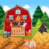 Djur på gården