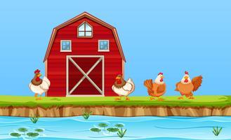 Kycklingar på gårdscenen vektor