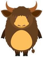 Brun yak med gott ansikte
