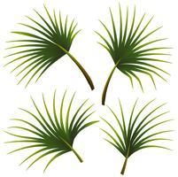 Set av palmblad vektor