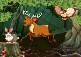 Skogsplats med vilda djur vektor