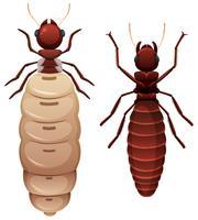 Weißer Hintergrund mit zwei Termiten