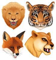 Eine Reihe von Wildtierkopf