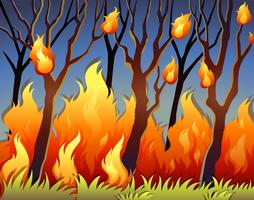 Träd i skog i brand