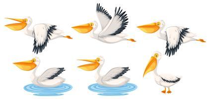 Set av pelikan karaktär vektor