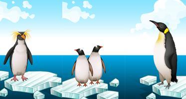 Pingviner står på isberg