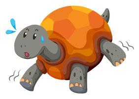 Gullig sköldpadda som löper med swet