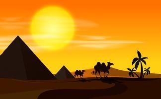 Öken scen med kameler vid solnedgången