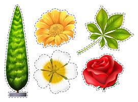 Verschiedene Arten von Blumen vektor