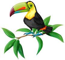 En vektor av toucan på vit bakgrund