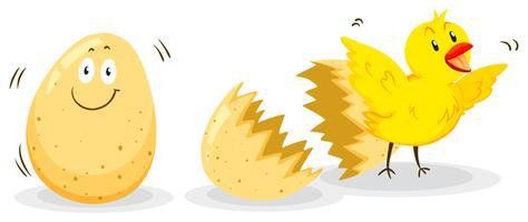 Ei und kleines Küken vektor