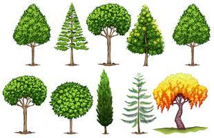 Set verschiedene Arten von Bäumen vektor