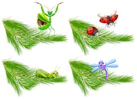 Insekt auf Kiefer-Niederlassung vektor