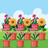 Eine Reihe von Blumen im Topf vektor
