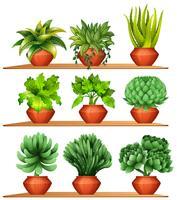Olika typer av växter i lerkrukor