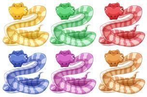 Olika färger av orm