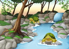 Två sköldpaddor som bor i floden vektor