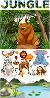 Wilde Tiere leben im Dschungel