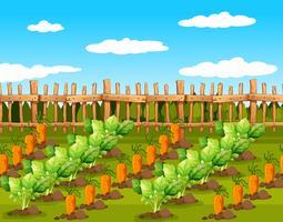 Fält av matgrödor vektor