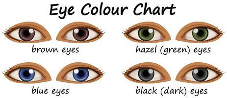 Människa ögon med olika färger