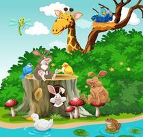Vilda djur som bor i parken vektor