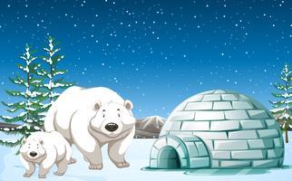 Isbjörn står nära igloo på natten