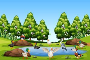 Många fågel i naturen