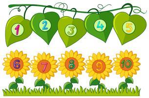 Nummer en till tio på löv och blommor