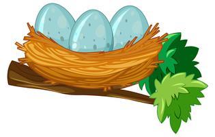 Ägg på boet vektor