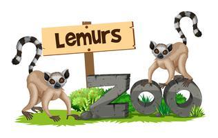 Zwei Lemuren im Zoo vektor