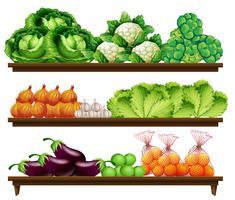 Set organisches Gemüse vektor