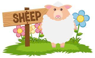 Weiße Schafe im Hof